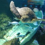 sea turtle at Auckland's aquarium