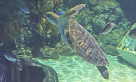 Boston Takes On Auckland's Aquarium