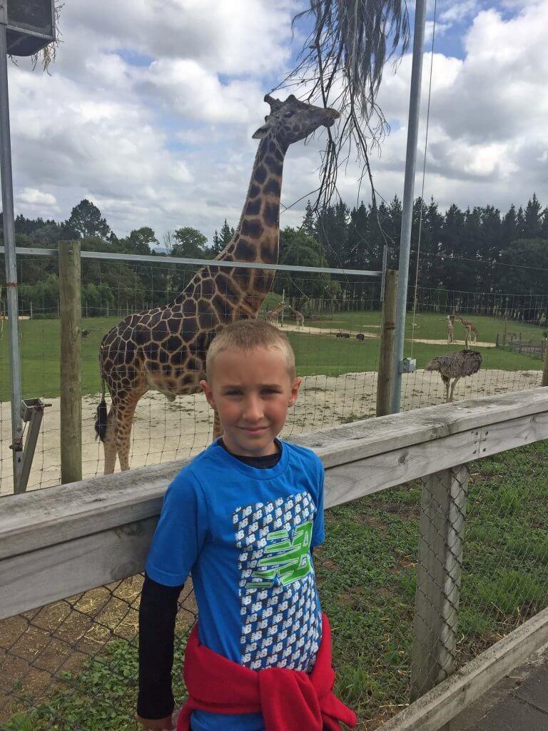 My son with a giraffe at Hamilton Zoo.